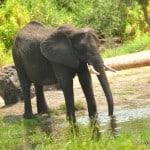 Wild Africa Trek elephant