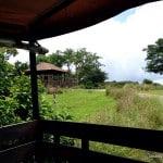 Wild African Safari 1