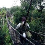 Wild African Safari Bridge 2