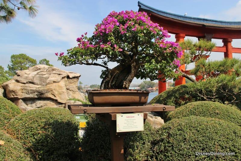 Japan Flower Festival Flower Bonsai Japan Epcot