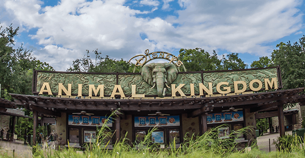 Fun Facts About Disney S Animal Kingdom